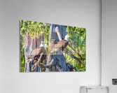 Eagle Tree  Acrylic Print