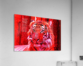 Rare Red Tiger  Acrylic Print