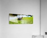 Turtle Portrait  Acrylic Print