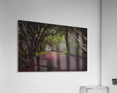 Rhododendron arched walkway  Acrylic Print