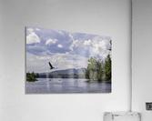 Eagle on Lake  Acrylic Print