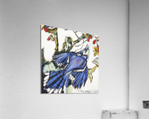 Louisiana Blue Jay Study on Wood  Acrylic Print