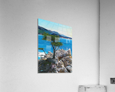 Lone Tree at Pebble Beach  Acrylic Print