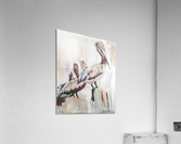 Louisiana Pelicans in the Fog with Metallic Silver  Acrylic Print