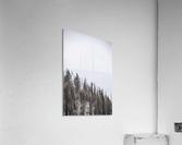 Winter Trees  Acrylic Print