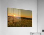 Cattle Pens Morning Sunburst  Acrylic Print