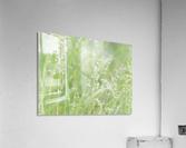 Herbe haute  Acrylic Print