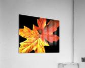 Fall Maple Leaves 3  Acrylic Print