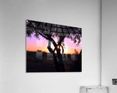 Tamarisk Sunset  Acrylic Print