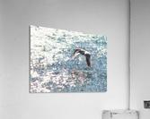 Sparkling Gull   Acrylic Print