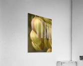 Beauty in a Gentle Breeze  Acrylic Print