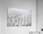 Lake Grass  Acrylic Print