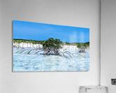 Mangroves in Estuary  Acrylic Print