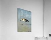 Ba Bum Bird  Acrylic Print