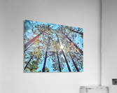 Tree Tops  Impression acrylique
