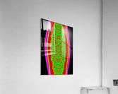 SHIVLING II  Acrylic Print