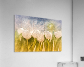 weise Tulpen   Acrylic Print