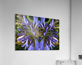 flower3  Acrylic Print