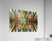flower43  Acrylic Print