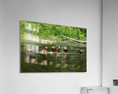 What the duck  Acrylic Print