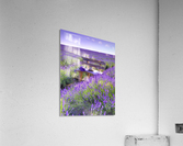 Bench in Lavender field  Acrylic Print