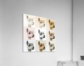 Collage of Alpacas in multicolour  Acrylic Print