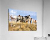 Little Bighorn Ponies  Acrylic Print