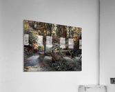 Redwood forrest  Acrylic Print