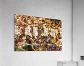 Reflex - X  Acrylic Print