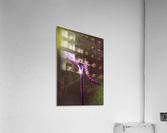 12494253_10153497339628558_1614706987_o  Acrylic Print