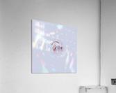 Clear Mind  Acrylic Print