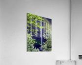 Secret Falls  Acrylic Print