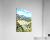 Wild Yellowstone  Acrylic Print
