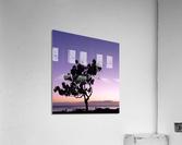 Silhouette  Acrylic Print