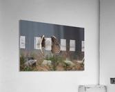Eurasian Eagle-Owl by Milan Zygmunt   Acrylic Print