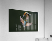 Fight Between Rainbows by Marco Redaelli   Acrylic Print
