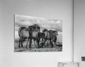 Happy Family by Bragi Ingibergsson  Acrylic Print