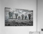 Big Family  Acrylic Print