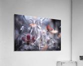 Une Fleur, une Histoire by Fabien BRAVIN   Acrylic Print