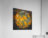 Textures  Acrylic Print