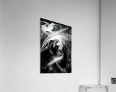 FLUX OF LOVE  Acrylic Print