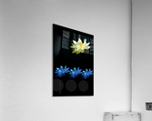 Lotus 1  Acrylic Print
