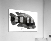 DOS FISHES  Acrylic Print