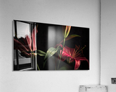 Floraison 2  Acrylic Print