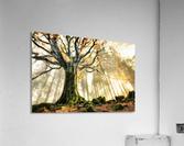 November by Christophe Kiciak   Acrylic Print