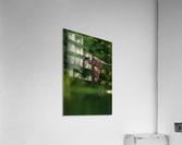 Wesley Allen Shaw 00460  Acrylic Print