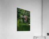 Wesley Allen Shaw 00460 1609734665.9256  Acrylic Print