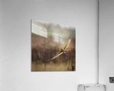 Wesley Allen Shaw 02128  Acrylic Print