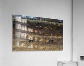 Wesley Allen Shaw 01943  Acrylic Print