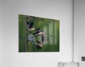 Wesley Allen Shaw 01788  Acrylic Print